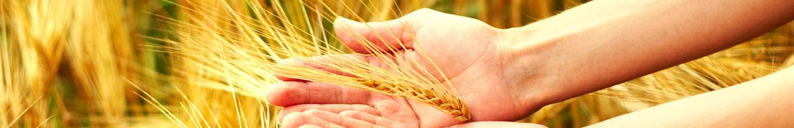 mulmix wheat